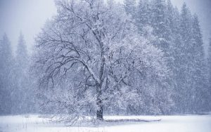 silnii-snegopad-1920x1200